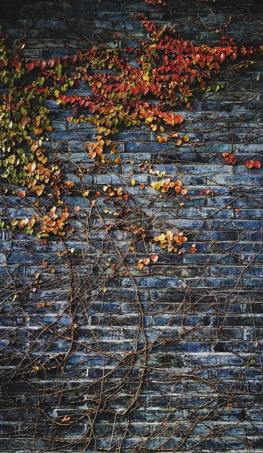 Eine Mauer zum Schutz vor Aufmerksamkeit