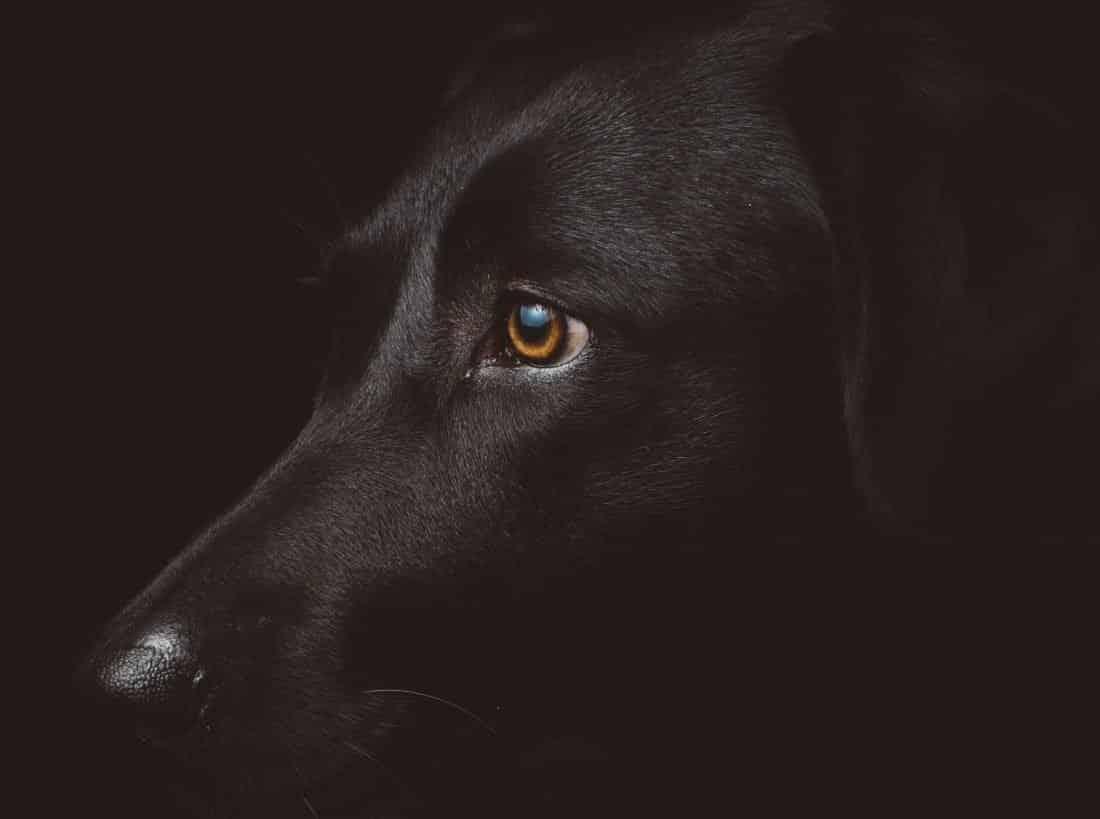 Depressionen gelten auch als der schwarze Hund