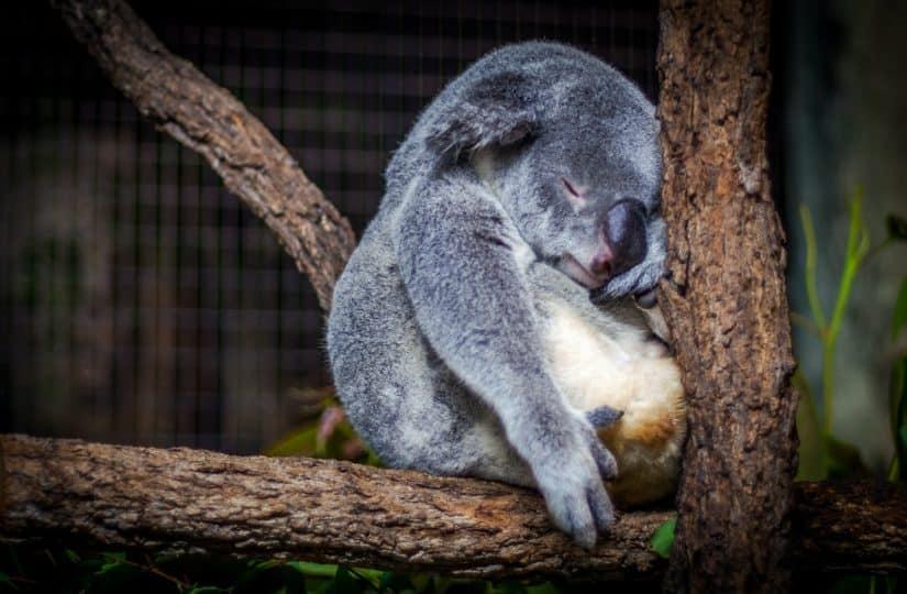 Schlafstörungen führen zu Müdigkeit